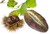 Vine and chestnut — Stock Photo