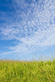 Autumn sky and the grass — Foto de Stock
