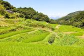 Rice Terraces of the mountain — Stock Photo