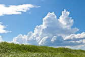 Grass and summer thunderhead — Stock Photo