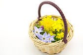 Flower Basket — Stock Photo