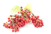 Small red fruits — Foto de Stock