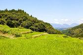 Tarasy ryżowe w górach — Zdjęcie stockowe