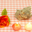 Turban shell and a rose and candles — Stock Photo