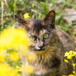 Rape flowers and kitten — Stok fotoğraf