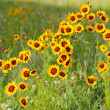 Yellow flowers in early summer — Stock Photo