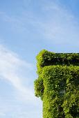 Hus som har krånglat med murgröna — Stockfoto