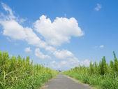 草甸与夏季的天空λιβάδι με καλοκαιρινό ουρανό — 图库照片