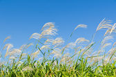 Sky and grass in autumn — Stock Photo