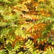 Stock Photo: Blend of leaves turning yellow