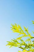 Blue sky and young grass — Stock Photo