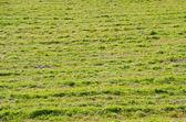 Open field of winter pastures — Stock Photo