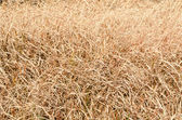 Dried grass of winter — Stock Photo