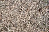 Dried grass in winter — Stock Photo