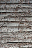 Wall plate of wood entangled with ivy — Stock Photo