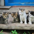 Four funny kitten — Stock Photo