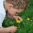 Boy wants to smell the dandelions — Stock Photo #23383502