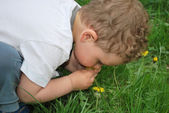 Boy wants to smell the dandelions — Stock Photo