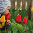 Boy smelling tulip — Stock fotografie