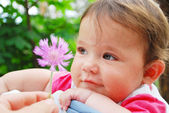 Bir çiçek tutan küçük şirin kız — Stok fotoğraf
