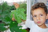 A little boy and a snail. — Stock Photo