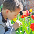 Stock Photo: In garden, near tulips sitting little boy smelling flow