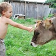 The boy and the calf — Stock Photo #27450963