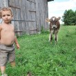 The boy and the calf — Stock Photo #27450973
