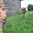 The boy and the calf — Stock Photo