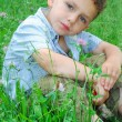 Little boy sits on a lawn of clover. — Foto de Stock