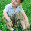 Little boy sits on a lawn of clover. — Stock Photo