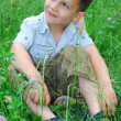 Little boy sits on a lawn of clover. — Stock Photo #27828705