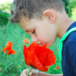 Stock Photo: Boy stands near flowers poppies.