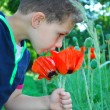 A boy stands near flowers poppies. — Stock Photo