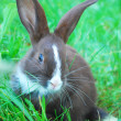 Small black-and-white rabbit sitting on the grass. — Stock Photo