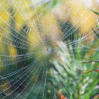 Indian summer,cobweb — Stock Photo