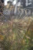 Indian summer,cobweb — Stock Photo