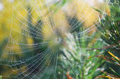 Indian summer,cobweb — Foto de Stock