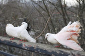 Three pigeons in the spring in the park sitting on fence — Stock Photo