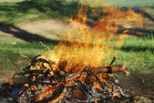 Fire the woods — Stock Photo