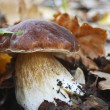 Stock Photo: Boletus.