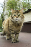 Yard cat. — Stock Photo