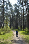 boy walking along the road in the pine forest — Stock Photo