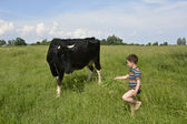 Little boy feeds the cow grass. — Foto de Stock
