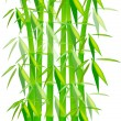 Green Bamboo Plants isolated on white — Imagen vectorial
