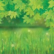 Vector of spring background with green grass and branches of maple's tree. — Stock Vector
