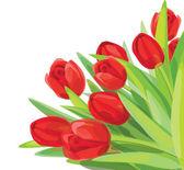 Red tulips vector. — Stock Vector