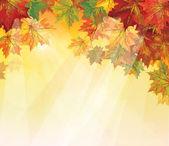 вектор осенних листьев на желтом фоне. — Cтоковый вектор