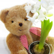 Cute teddy bear holding hyacinth - Stock Photo