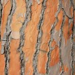 Relief bark of an old tree close-up — Stock Photo